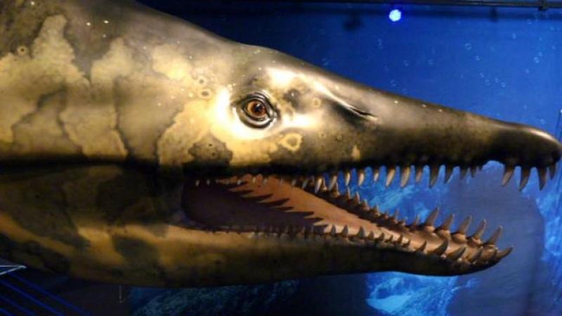 paleoaquarium, il mare al tempo dei dinosauri all'acquario di genova - Acquario Di Genova Orari Biglietteria